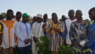 Photo of Campagne cotonnière : L'UNPCB en visite de champ à Safané.